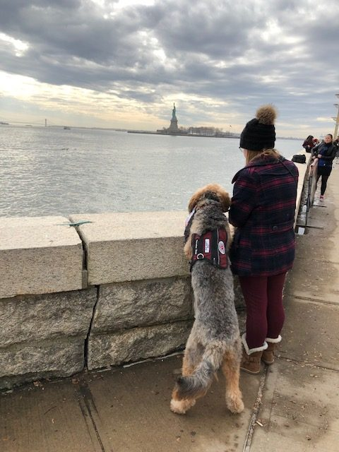 Asher, a medical alert dog, travels with his handler on a trip to New York City