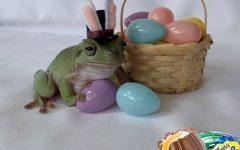 Betty the frog Cadbury Bunny Tryouts