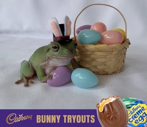 Betty the frog Cadbury Bunny Tryouts
