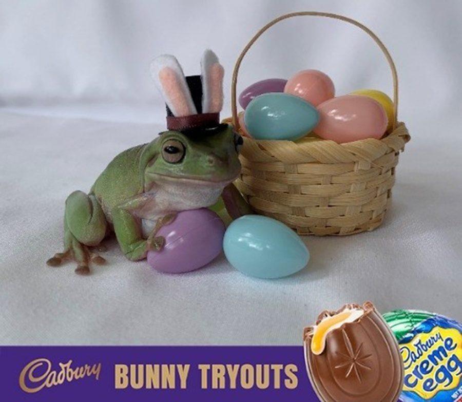 Betty+the+frog+Cadbury+Bunny+Tryouts